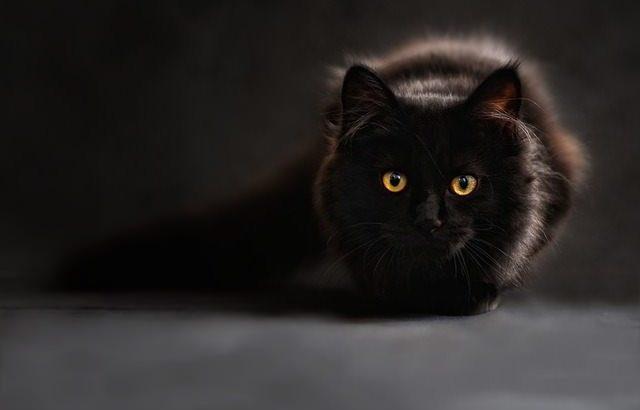 恋愛を長続きさせたいなら、猫に学べ。